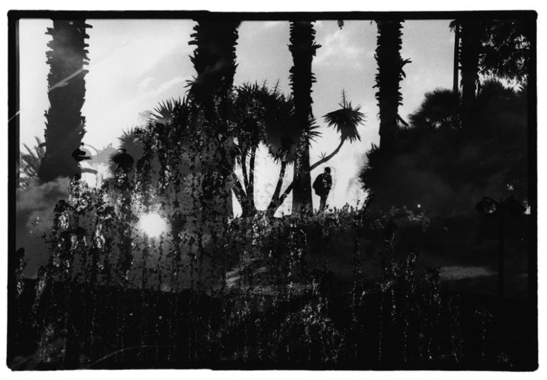 palmiersjetow